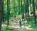Attraits touristiques Gatineau - Parc de la Gatineau